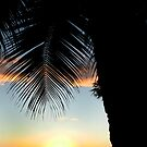Coconut tree at sunset by Greg Kolio Taylor
