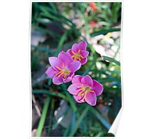 Pink flowers - Nature Poster