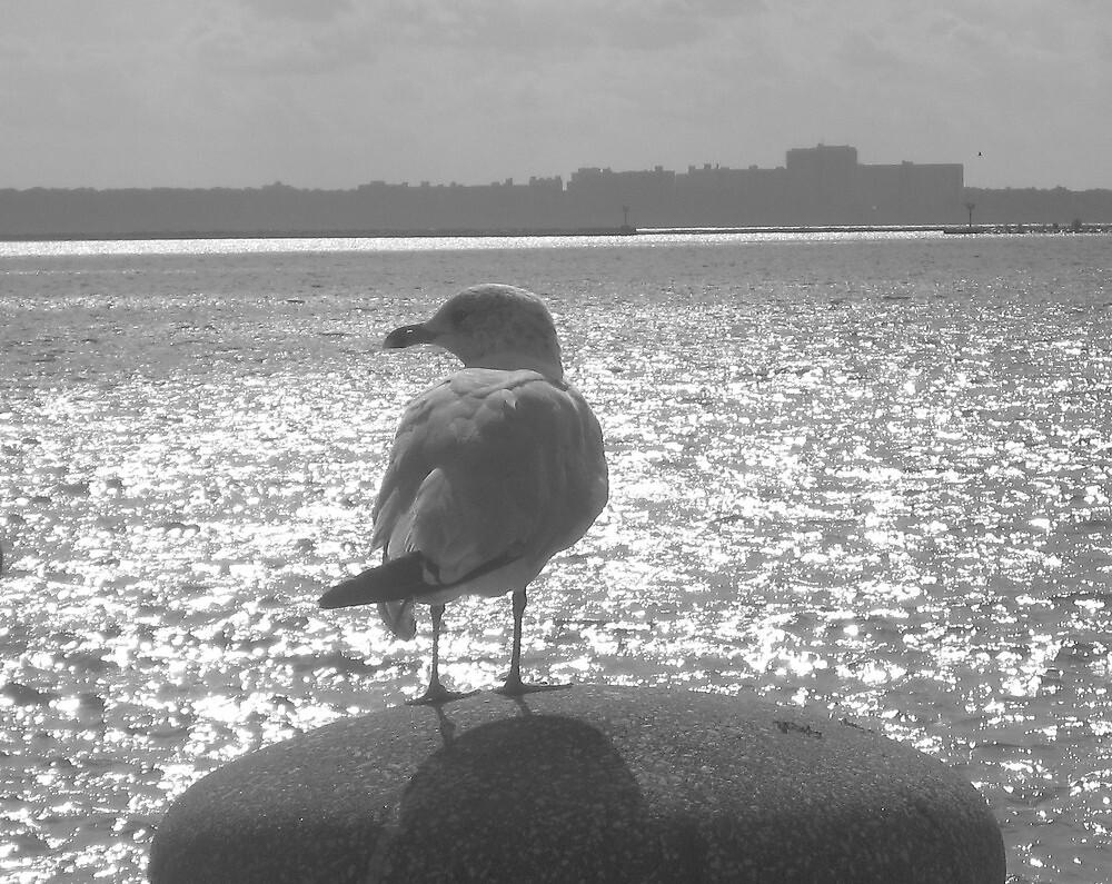 Bird Watching  by deepstarr7020