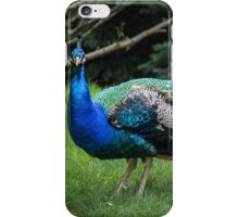 Glory of A Peacock  iPhone Case/Skin