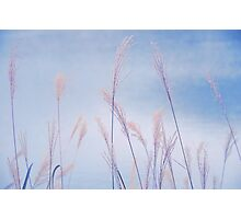 Dance of the Reeds Photographic Print