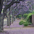 Jacaranda Streetscape by chijude