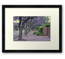 Jacaranda Streetscape Framed Print