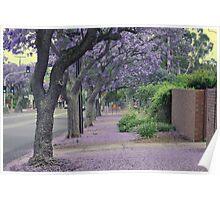Jacaranda Streetscape Poster