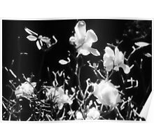 there be magnolias and butterfies in my garden of dreams Poster