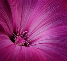 Floral Vortex by Doug Chinnery