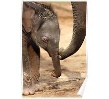 Elephant Kiss Poster