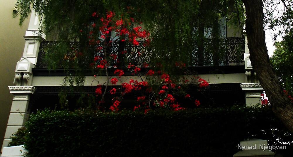 Red flowers by Nenad  Njegovan