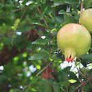 Moroccan desert oasis pomegranates by Christine Oakley
