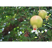 Moroccan desert oasis pomegranates Photographic Print