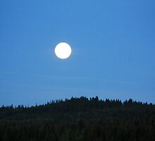 Full Moon On A Clear Night by Alyce Taylor