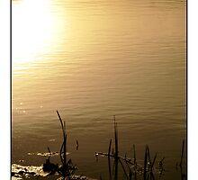 Evening - (Hartham) by MoGeoPhoto