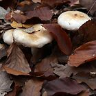 Mushrooms among leaves at autumn by Zsolt Hever