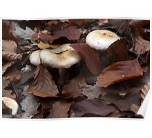Mushrooms among leaves at autumn Poster