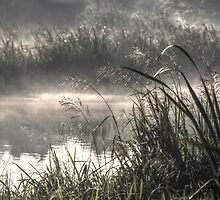 Grasses in morning mist by Andy Morley