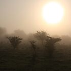 Trees in fog by Zsolt Hever