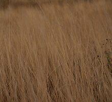 hidden in the tall grass by shamusfrisbedog