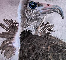 Proud Hooded Vulture (all styles animals series ) by Marilyns