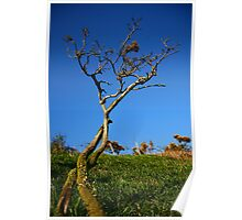 Twining Trees Poster