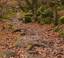 Fallen Leaves by Duncan Payne