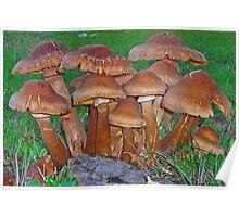 The Fungus Among Us Poster