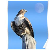 Red-Tailed Hawk and Moon Poster