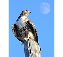 Red-Tailed Hawk and Moon Photographic Print