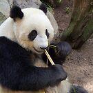 Panda Express by Tamara Mason