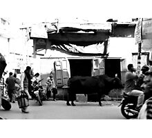 Bull in front of shop Photographic Print