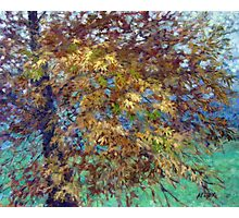 Oak Tree in October Photographic Print