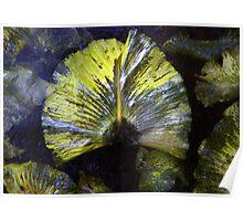 Frozen lily leaf Poster