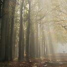 Walking in a world of light by jchanders