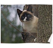 Kitten in Tree Poster