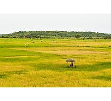 a wonderful Guinea-Bissau landscape Photographic Print