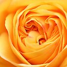 Golden Rose Heart by mooksool