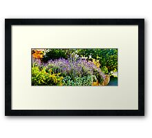 South Australia - CrabTree Vineyard - Lavender garden Framed Print