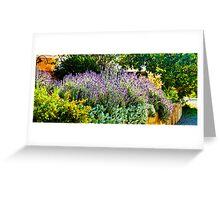 South Australia - CrabTree Vineyard - Lavender garden Greeting Card