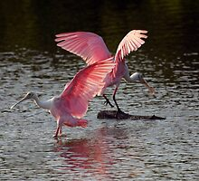 Rosy Dance by noffi