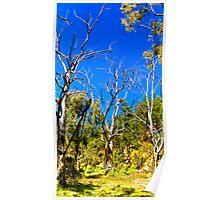 South Australia - Flinders Ranges - Mt Remarkable 2 Poster