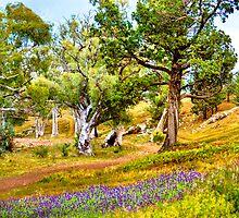 South Australia - Rawnsley park - The trail at dawn by Geoffrey Thomas