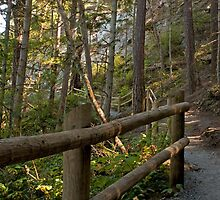 Trail at Deception Pass Park by Barb White