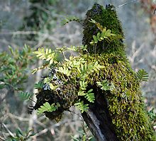 Moss, lichen, and Resurrection Fern by rd Erickson