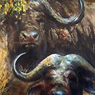 Kruger Park Buffalo by Tom Godfrey