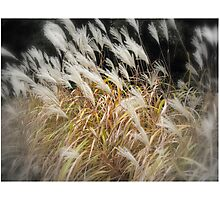 WINDY DAY!! Photographic Print