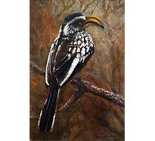 Yellow-Billed Hornbill Photographic Print