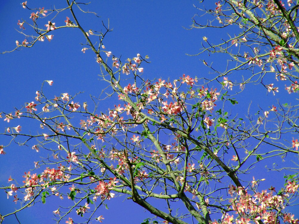 Blooming Tree by Rosalie Scanlon