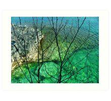 Water Willow Art Print