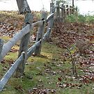 The same fence, another view by REC13