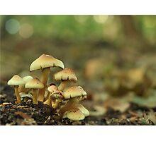 Portrait of the mushroom family Photographic Print