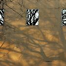 Reflections of the Trees of the Shadows by ElyseFradkin